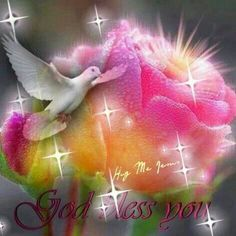 Jesus is the Rose of Sharon & the Dove is a symbol of the Holy Spirit. He Is Lord, Thank You Lord, God Bless You, Dove Images, Dove Pictures, Uplifting Thoughts, Good Thoughts, My Jesus, Jesus Christ