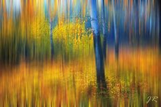 In the Golden Wood. Impressionism.