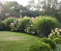 Hydrangea and grasses - Bungalow Blue Interiors - Home - green + white in thegarden