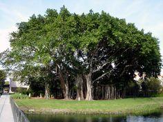 Todos Los Árboles Tienen Una Historia Que Contar | Naturaleza - Todo-Mail
