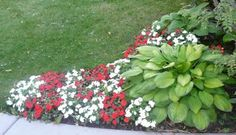 hosta and impatiens for east side of house