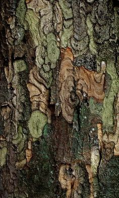 Lichen and tree bark. I don't know why but every time I look at it I thinks its The Predator!! That's a good thing!