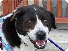 Corpus Christi, TX - Border Collie Mix. Meet Tuesday, a dog for adoption. http://www.adoptapet.com/pet/17147427-corpus-christi-texas-border-collie-mix