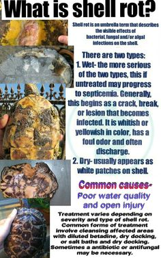74 Best My turtle/tortoise care posters images in 2017