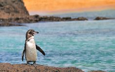 Help, Learn& Discover Extra Week Galapagos Islands Volunteer in Ecuador Apply Today!!
