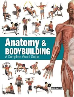 Understanding how muscles in action function is key to performing exercises correctly and getting a great workout. In Anatomy & Bodybuilding, highly...