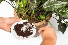 Coffee grounds are awesome for your garden! They add important nutrients to the soil and help it absorb and retain more water. Plus, it invites the good critters like earthworms, which basically plow the ground — and deter the bad kinds like slugs and snails, which will eat and/or kill your plants.