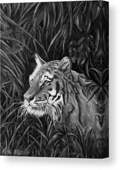 Tiger Canvas Print featuring the drawing Tiger Portrait by Faye Anastasopoulou Portrait Acrylic, Ocean Scenes, Thing 1, Stretched Canvas Prints, Print Pictures, Canvas Material, Wood Print, Artist At Work, Clear Acrylic