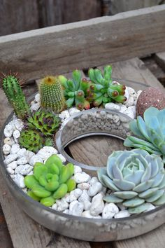I like the rocks.  I think I'll check my cupboard for creative pots for cactus!