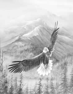 . Animal Sketches, Animal Drawings, Pencil Drawings, Art Sketches, Art Drawings, Eagle Wallpaper, Eagle Drawing, Eagle Art, Phoenix Art