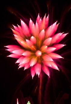 david johnson Fireworks long exposure 8 pic on Design You Trust