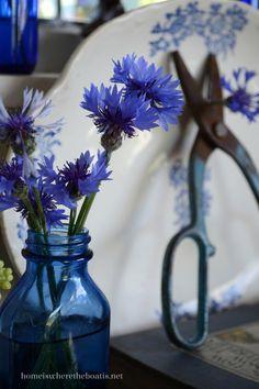 Bluebottle flower in blue bottles | homeiswheretheboatis.net #pottingshed