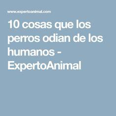 10 cosas que los perros odian de los humanos - ExpertoAnimal