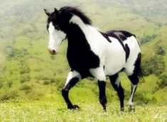 from: Equestrian Bitch / source: nolombodocavalo via northerncountrygirllife / > gorgeous markings!