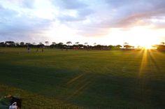 【Mama's Hawaii】  息子のサッカーの試合でした。  試合はいつもWaipio Soccer Complexという所で行われます。 ここは、23個の天然芝のサッカーフィールドがある、それはそれは広大なサッカー専用の場所。 毎週末、たくさんの子供たちがここで試合をし、親たちもこぞって応援に来ます。  試合は残念ながら引き分けだったけど、試合後も陽が落ちるまで広い広い芝生のグラウンドで駆け回る子供たち