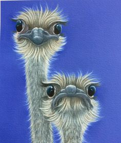 What's Up the ostrich painting
