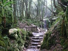 This is a Public Domain picture. stairs, forest, mystical, puzzlewood, england