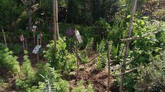 Jardim com muitas flores acabadas de plantar, na sua maioria bolbos diversos. Quando florir vai ficar muito colorido.