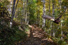 Flight Through the Autumn Forest
