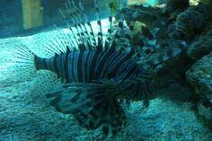17 Blue Reef Aquarium, Fish, Pets, Animals, Animales, Animaux, Pisces, Animal, Animais