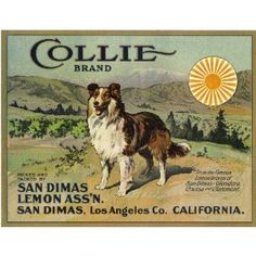 San Dimas Collie Dog Lemon Citrus Fruit Crate Box Label Art Print // You would be hard-pressed to find something that gets me at so many points. Farm collie dog? Check. Snow-covered San Gabriels in the distance? Check. Citrus crate art? Check.