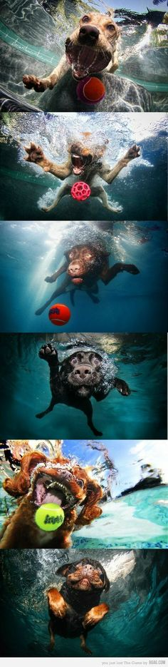 Underwater photos of dogs playing fetch…. so cute.