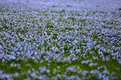 A field of blue.