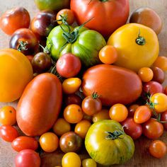 Vários tipos de tomate | Different types of tomato