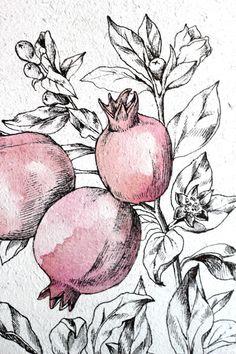Original Drawing. Botanical Art. Original by AugustArtStudio