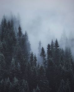 New nature trees photography mists ideas Foggy Forest, Misty Forest, Pine Trees Forest, Forest Wallpaper, Forest Photography, Nature Tree, Mother Nature, Mists, Woodland