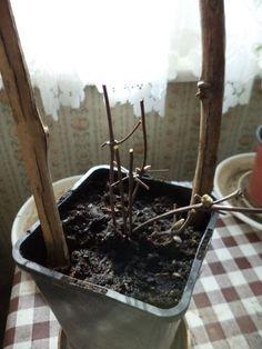 Garden Plants, Terrarium, Gardening, Terrariums, Lawn And Garden, Horticulture