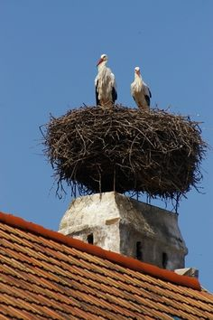 Rust, Austria was renown for the Storks nests built on chimneys. They would return to the same next every year.