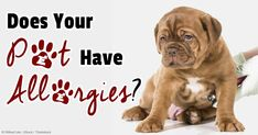 Compared to allergy shots, sublingual immunotherapy (SLIT) is given to pets orally so it's not painful. http://healthypets.mercola.com/sites/healthypets/archive/2014/06/04/sublingual-immunotherapy.aspx