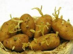 Ha eddig te is megpucoltad a kicsírázott krumplit, a cikk elolvassa után soha többé nem teszed! Soho, Pear, Potatoes, Fruit, Vegetables, Diet, Potato, Small Home Offices, Vegetable Recipes