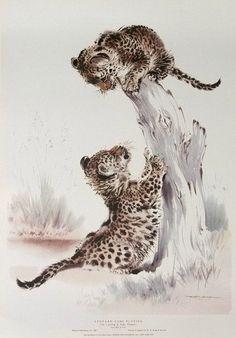 Leopard Cubs playing Ralph Thompson print by PrintsandPostersCo