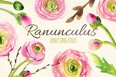 Watercolor ranunculus flowers set by Yuliya Shora on Creative Market