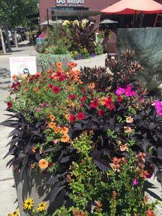 "Edmonds, WA, in ""Street Corner Gardens and Hanging Baskets"""