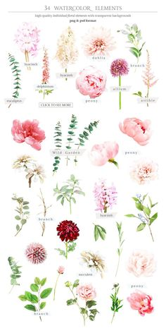 Watercolor Botanical set by TL Design on Creative Market . - Watercolor Botanical set by TL Design on Creative Market Waterco - Flower Chart, Flower Types, Different Types Of Flowers, Arte Floral, Watercolor Flowers, Drawing Flowers, Watercolor Wedding, Tattoo Watercolor, Watercolor Ideas