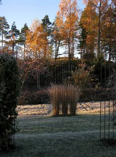 """Solbacka DesignThis might be one of the best features in my garden:  rebar """"veils"""" in the morning light."""