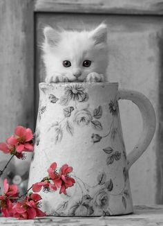 Kitty in black and white with a splash of colour... This will never fail to be amazing:)