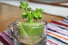 Eight vegetables you can regrow in your kitchen.