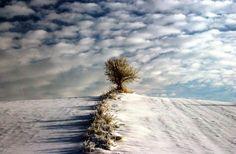 Winter Near Mokobody - Poland