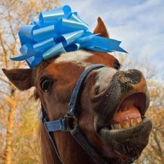 Don't look a gift horse in the mouth  Via Horse Sweats Ladies perspire -fb
