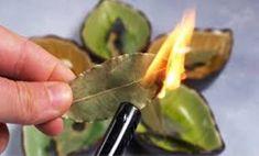ysxdfre Bay Leaves Uses, Bay Leaf Benefits, Burning Bay Leaves, Sante Bio, Human Nutrition, Money Spells, Luck Spells, Recipes, Wood