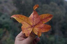 Jugando con el modo manual #fotografia de una hoja que me encontré #naturaleza colores de #otoño #huechuraba #santiago #chile #postales_chile  #chilefotos #chilegram  #chilefotos  #igersrancagua #instalike #instachile #foto #fotografia #nikon #WorldTravelIG #photography #photooftheday #travelphotography #postales_chile http://tipsrazzi.com/ipost/1523239761039483916/?code=BUjon4AgmQM
