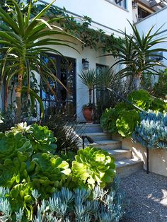 5 Portentous Tips: Backyard Garden Design Plants modern garden ideas awesome.Big Garden Ideas How To Make small modern garden ideas. Succulent Landscaping, Succulents Garden, Backyard Landscaping, California Front Yard Landscaping Ideas, Huge Succulents, Succulent Outdoor, Florida Landscaping, Garden Planters, Backyard Ideas