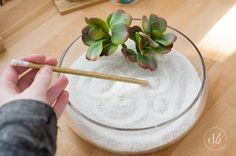 21 Last-Minute Gifts That Are Actually Thoughtful Zen garden. Homemade Christmas, Diy Christmas Gifts, Christmas Ideas, Christmas Lights, Holiday Crafts, Craft Gifts, Diy Gifts, Tech Gifts, Cheap Gifts