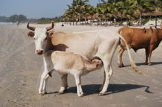 Nos chers amis des Alizés Beach Resort en Casamance
