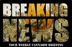 Your Weekly Cannabis Briefing! #allbud #marijuana #cannabis #weed #news #cannabisbriefing #medical #medicalmarijuana #use #smoke #enjoy #healthy #life