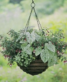 hanging baskets for shade